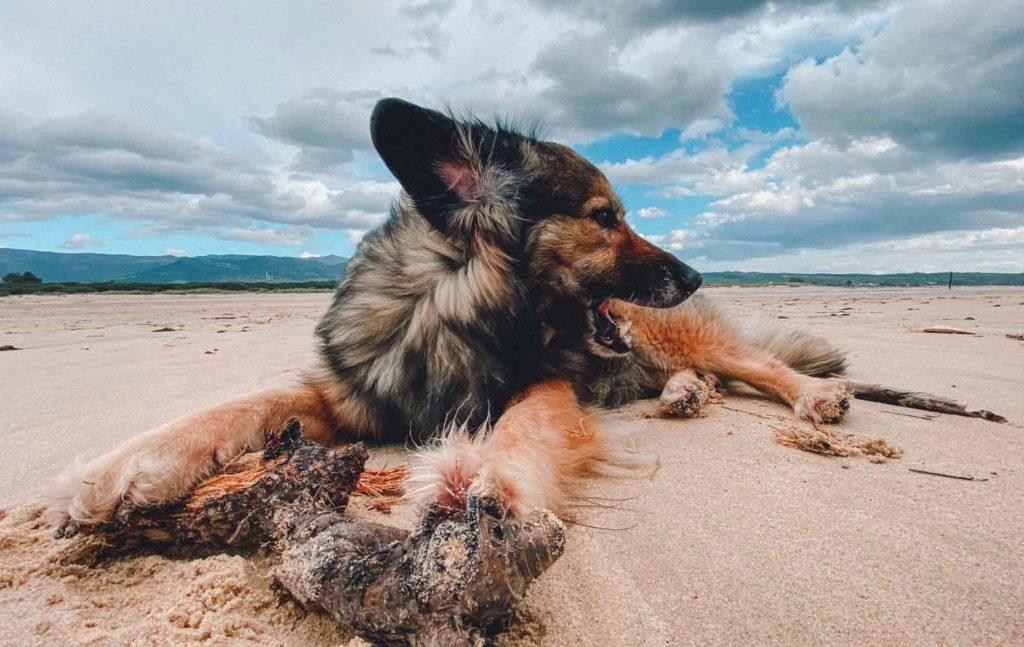 Hund Moya, Karin Scherpe